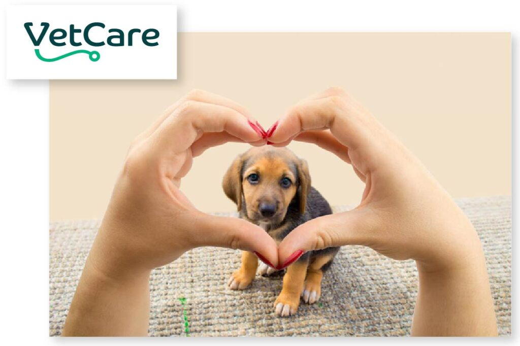 VetCare Show Us Your Heart Campaign